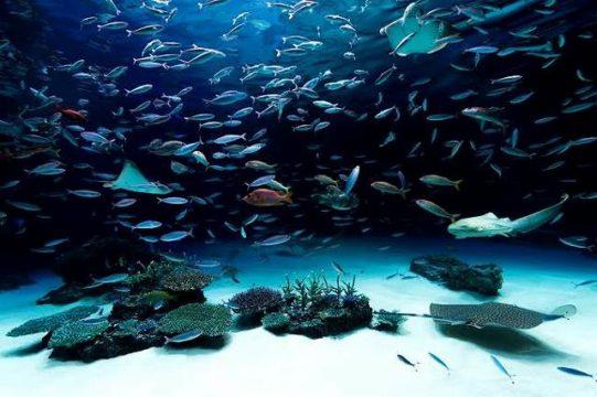 神戸水族館